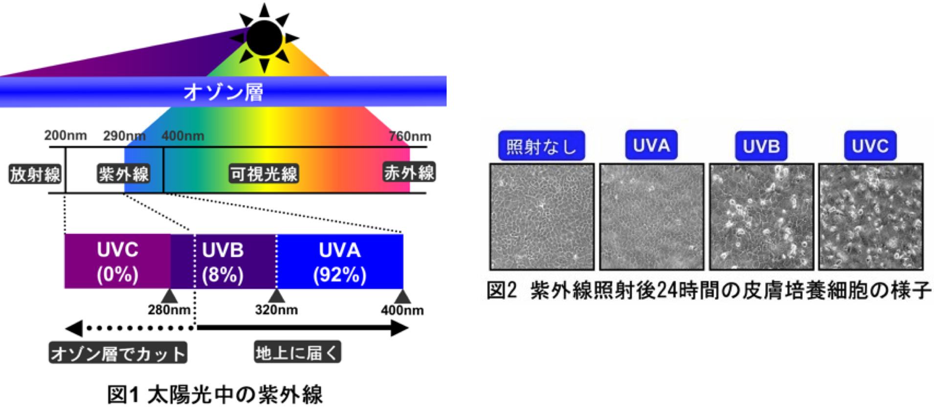 ultraviolet rays dna factors that Detection and absorption of ultraviolet light causing changes in dna and thus skin cancers factors (spf) ranging from spf 2.
